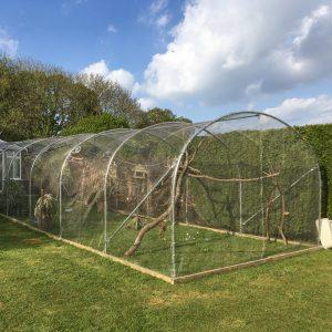 Bird Aviary Mesh outdoor enclosure in garden