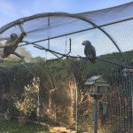 Bird Aviary Mesh with African Grey Parrots