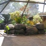 Aviary Mesh inside of enclosure
