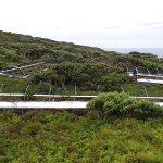 aviary mesh gough island RSPB