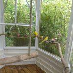 Aviary zoo mesh panels with budgies inside