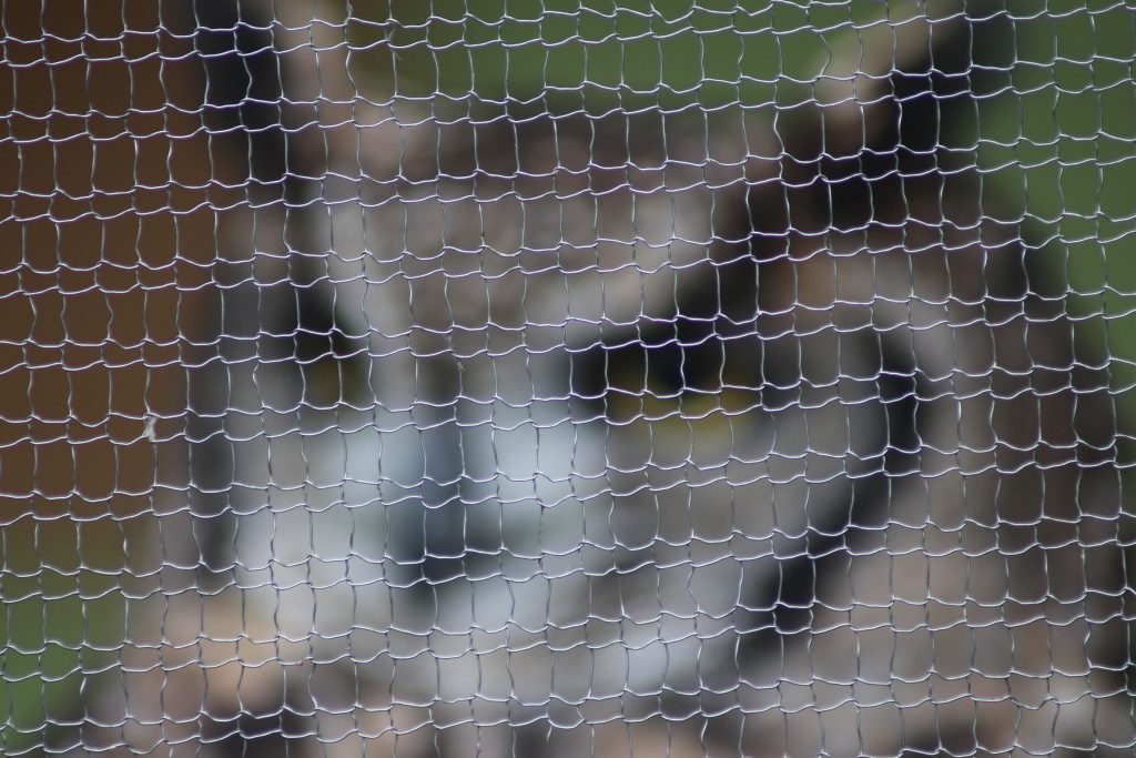 aviary mesh knitted wire mesh with owl out of focus in background