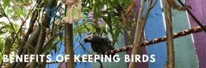 Benefits of keeping birds