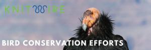 Bird Conservation Efforts California Condor