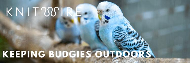 keeping budgies outdoors