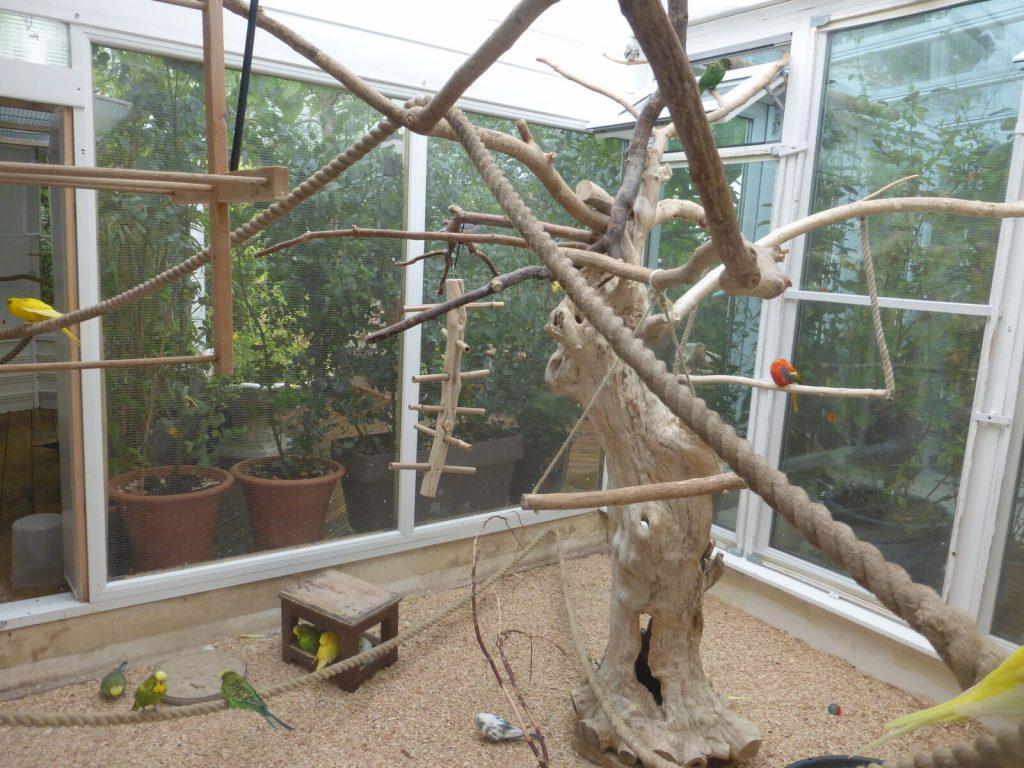 Indoor budgie aviary