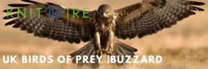 Buzzard with wings open