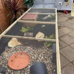 outdoor long tortoise run