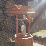 wooden well inside bird aviary