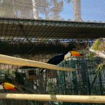 close up Toucans inside enclosure made with ClearMesh roof