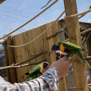 ClearMesh roof being used at zoo with lorikeets
