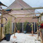 Outdoor Macaw Aviary