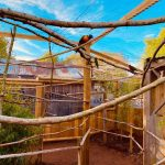 inside walk through aviary at Wild Zoological Park