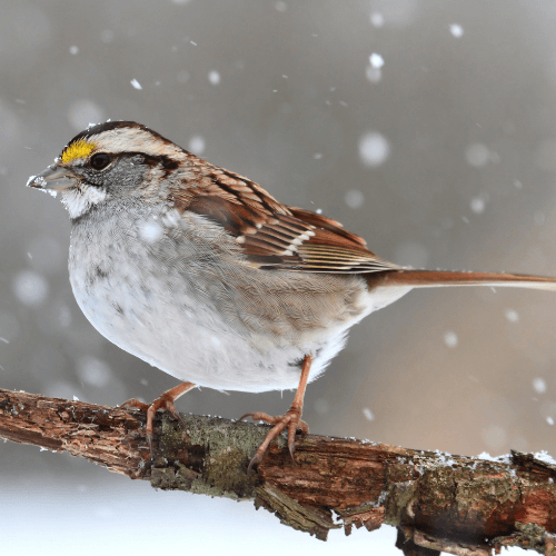 Bird in winter snow on branch